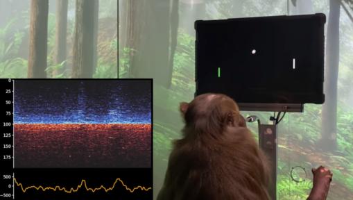 Makak sterujący grą dzięki chipowi Neuralink